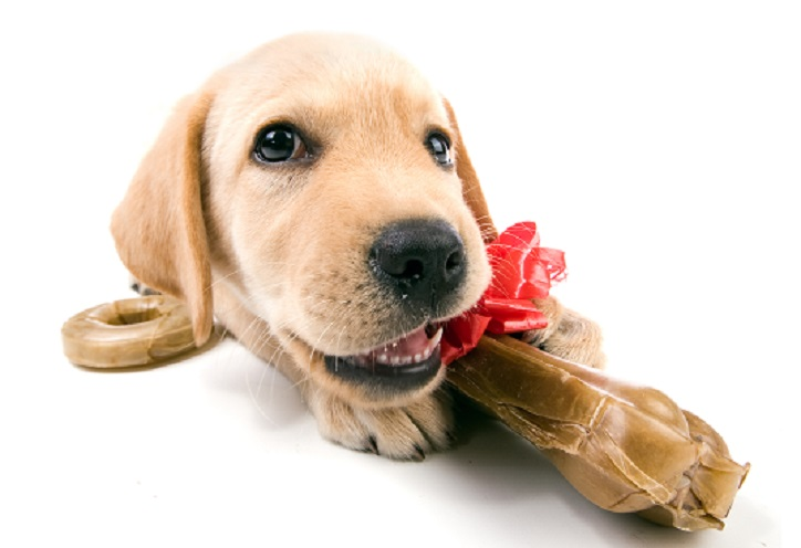 Destructive chewing, Stop your dog from destructive chewing
