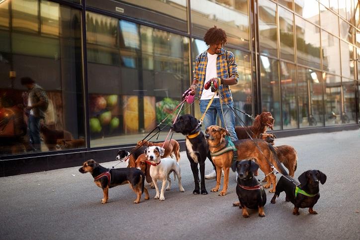 Dog Walker, How to Choose a Dog Walker