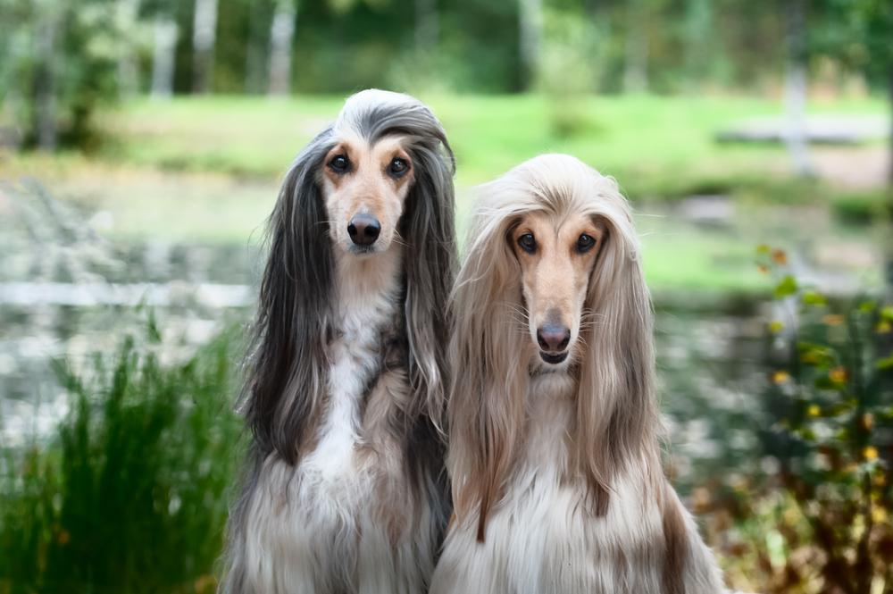 Expensive Dogs, Most Expensive Dogs, Dogs Expensive