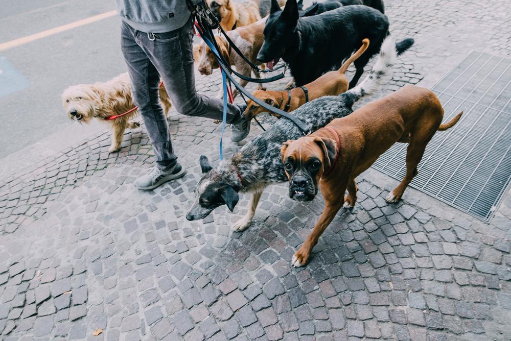 dog walker background check