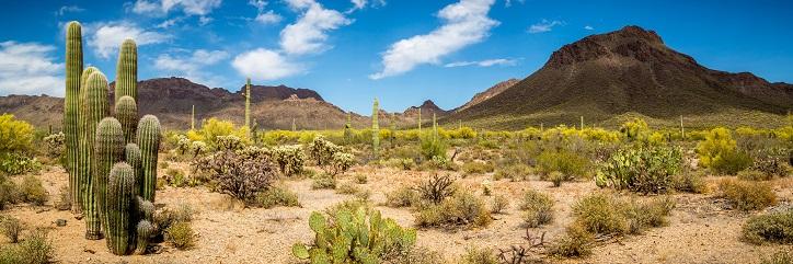 Cheating Statistics in the State of Arizona