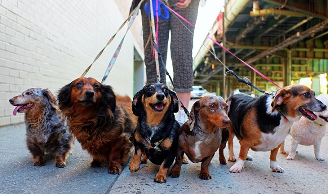 Choosing a Dog Walker