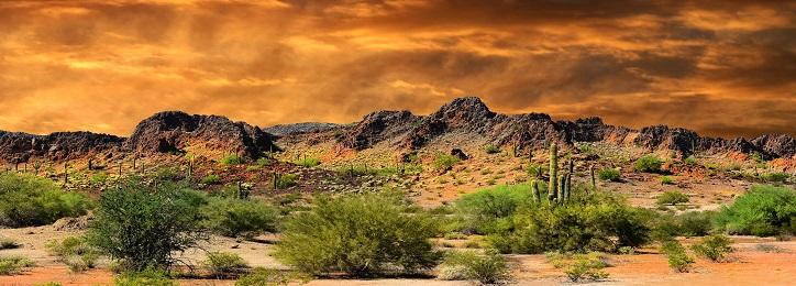 New Mexico Negligence Law