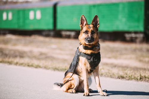 police dog facts