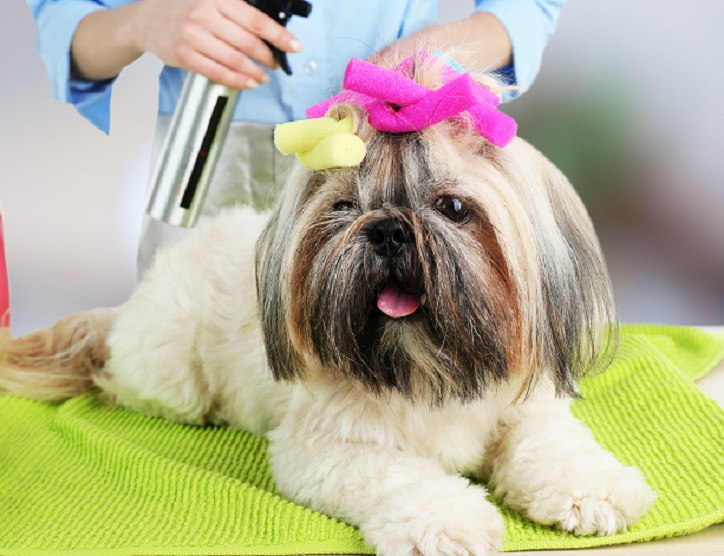 Best Colognes for Your Dog
