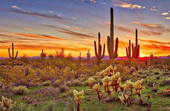 Arson Law Arizona