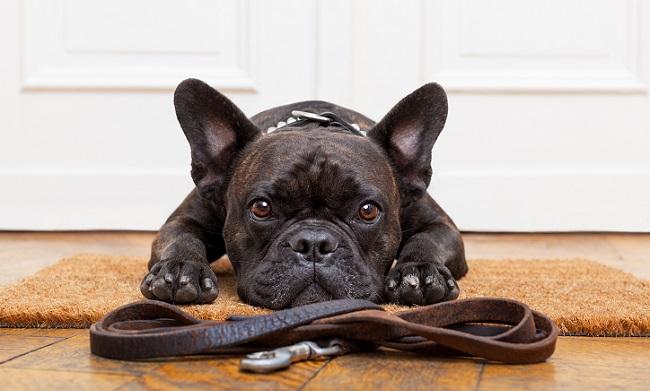 How to Choose a Dog Walker