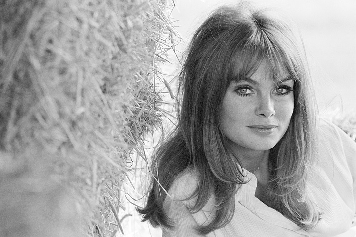 Jean Shrimpton Background Check